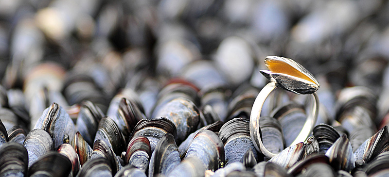 mussel_ring_beach_gold
